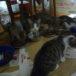 可愛らしさ炸裂!元気1000%(=^ェ^=) 生後約3~4ヶ月 仔猫の里親募集