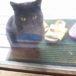お母さん猫と仔猫4匹の里親さん募集です
